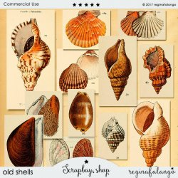 OLD SHELLS