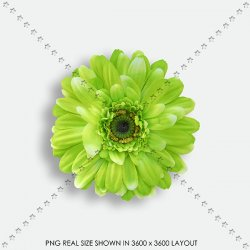 EMBEL 132 FABRIC FLOWER