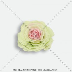 FLORAL 199 FABRIC mint ROSE