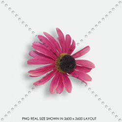 FLORAL 144 FABRIC PINK DAISY