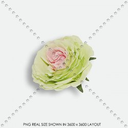 FLORAL 201 FABRIC mint ROSE