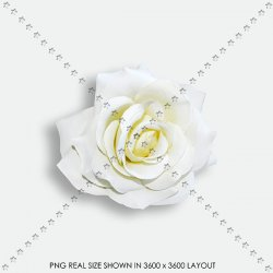 FLORAL 186 FABRIC ROSE WHITE