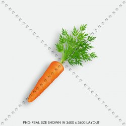 VEGETABLE 39 CAROT