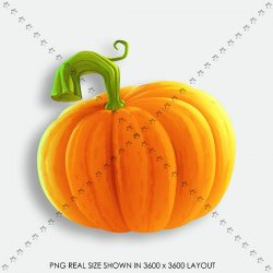 AUTUMN 155 PUMPKIN