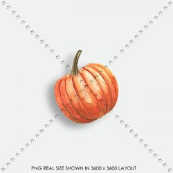 AUTUMN 164 PUMPKIN