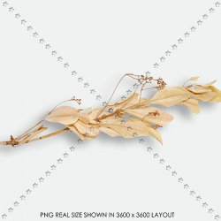 FLORAL 217 DRY BRANCHE