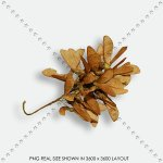 LEAF 50 DRIED BRANCHE